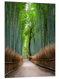 Hartschaumbild  Bambus Wald in Kyoto Sagano Arashiyama, Japan - Jan Christopher Becke