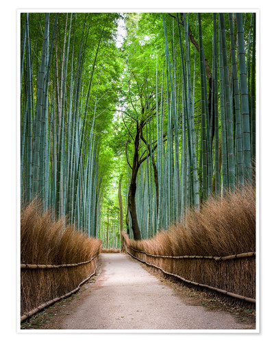 Jan Christopher Becke Bambus Wald In Kyoto Sagano Arashiyama Japan