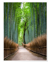 Poster  Bambus Wald in Kyoto Sagano Arashiyama, Japan - Jan Christopher Becke
