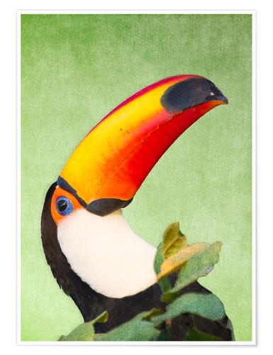 Premium-Poster A colourful toucan bird on a tropical background.