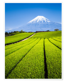 Jan Christopher Becke - Teeplantage und Berg Fuji in Shizuoka, Japan