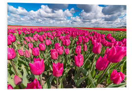 Hartschaumbild  Beautiful dutch Field of pink tulips - Remco Gielen