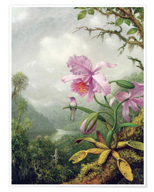 Premium-Poster  Kolibri thront auf einer Orchidee - Martin Johnson Heade