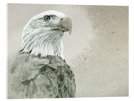 Acrylglasbild  Majestätischer Weißkopfseeadler - Ashley Verkamp