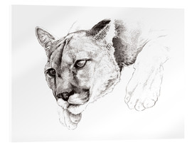 Acrylglasbild  Lauernder Puma, Studie - Ashley Verkamp