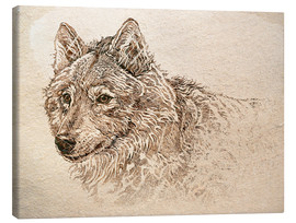 Leinwandbild  Grauwolf Studie - Ashley Verkamp