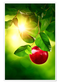 Poster Roter Apfel