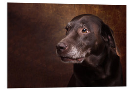 Forex  Alter Chocolate Labrador Portrait - Janina Bürger