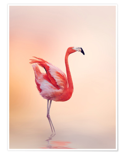 Premium-Poster Flamingo Feeling