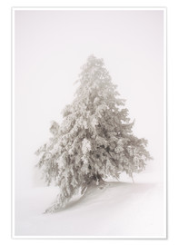 Premium-Poster Single snow covered tree in thick fog in winter  Rigi, Switzerland