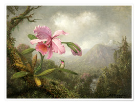 Poster  Orchidee und Kolibri - Martin Johnson Heade