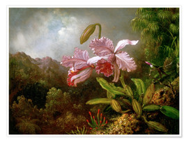 Premium-Poster  Orchidee in einem Dschungel - Martin Johnson Heade