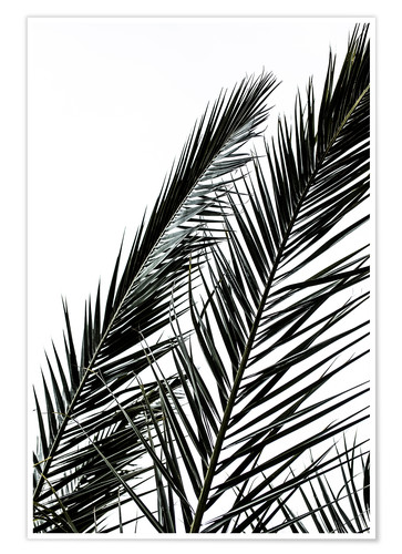 Premium-Poster Palm Leaves