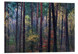 Hartschaumbild  Bunter Herbstwald - Mark Scheper