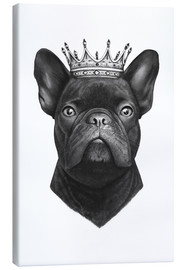 Leinwandbild  King French bulldog - Valeriya Korenkova