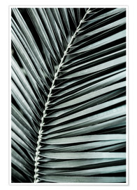Premium-Poster French Palms 3