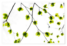 Premium-Poster Green Leaves 3