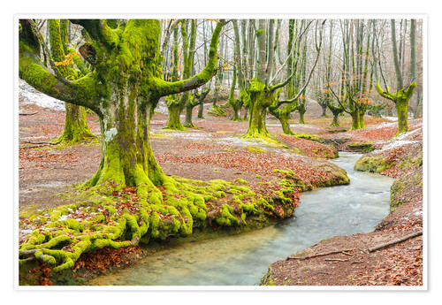 Premium-Poster Beechwood and rivulet. Otzarreta, Gorbeia Natural Park, Biscay, Spain, Europe.