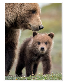 Poster Grizzly mit Jungtier