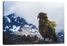 Leinwandbild  Kea am Avalanche Peak, Neuseeland - Nicky Price