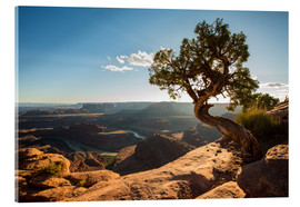 Acrylglasbild  Dead Horse Point vor dem Colorado Canyon, Utah - Francesco Vaninetti