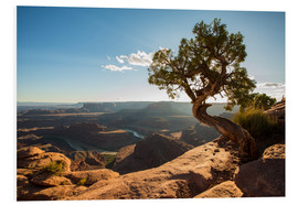 Hartschaumbild  Dead Horse Point vor dem Colorado Canyon, Utah - Francesco Vaninetti