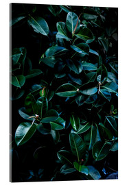 Acrylglasbild  Dark Leaves 4 - Mareike Böhmer Photography