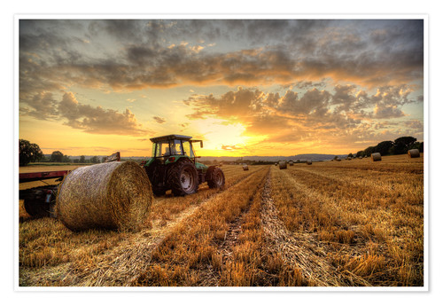Premium-Poster Harvested Cornfield Sunset