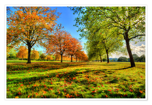 Premium-Poster Autumn Trees Windsor