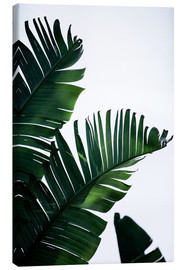 Leinwandbild  Palm Leaves 16 - Mareike Böhmer