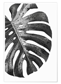 Poster  Schwarze Monstera 01 - Art Couture