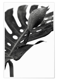 Poster  Schwarze Monstera 02 - Art Couture